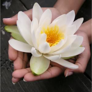 http://www.nhellandlmt.com/lotus-flower_hands.jpg